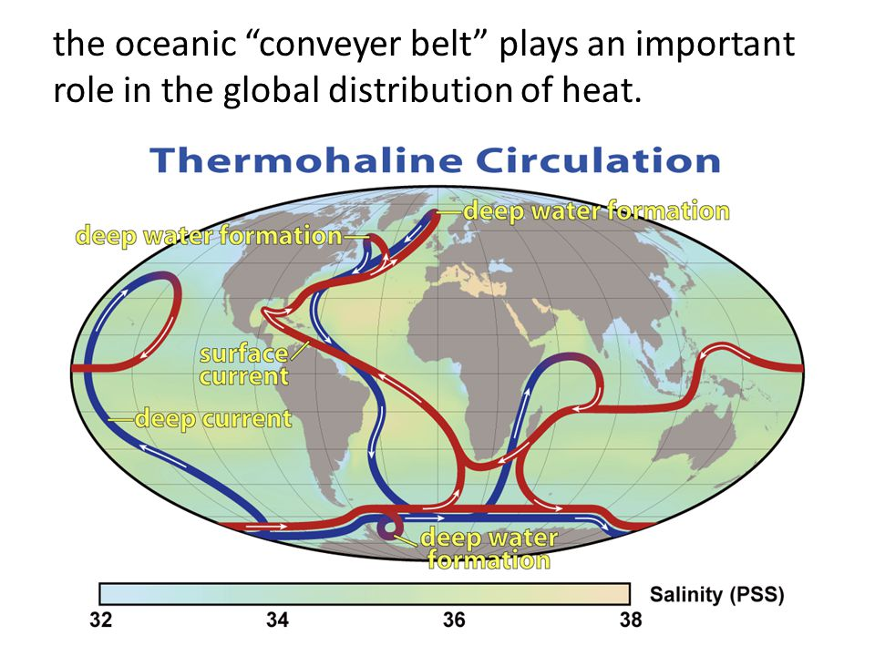 the oceanic conveyer belt plays an important role in the global distribution of heat.