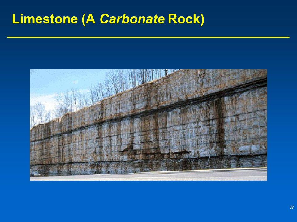 37 Limestone (A Carbonate Rock)