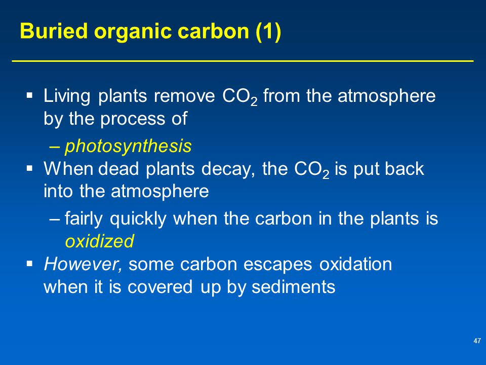 47 Buried organic carbon (1)  Living plants remove CO 2 from the atmosphere by the process of –photosynthesis  When dead plants decay, the CO 2 is put back into the atmosphere –fairly quickly when the carbon in the plants is oxidized  However, some carbon escapes oxidation when it is covered up by sediments