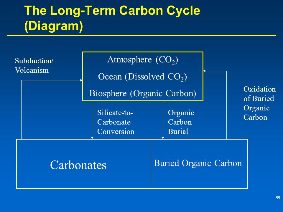55 The Long-Term Carbon Cycle (Diagram) Atmosphere (CO 2 ) Ocean (Dissolved CO 2 ) Biosphere (Organic Carbon) Carbonates Buried Organic Carbon Subduction/ Volcanism Silicate-to- Carbonate Conversion Organic Carbon Burial Oxidation of Buried Organic Carbon