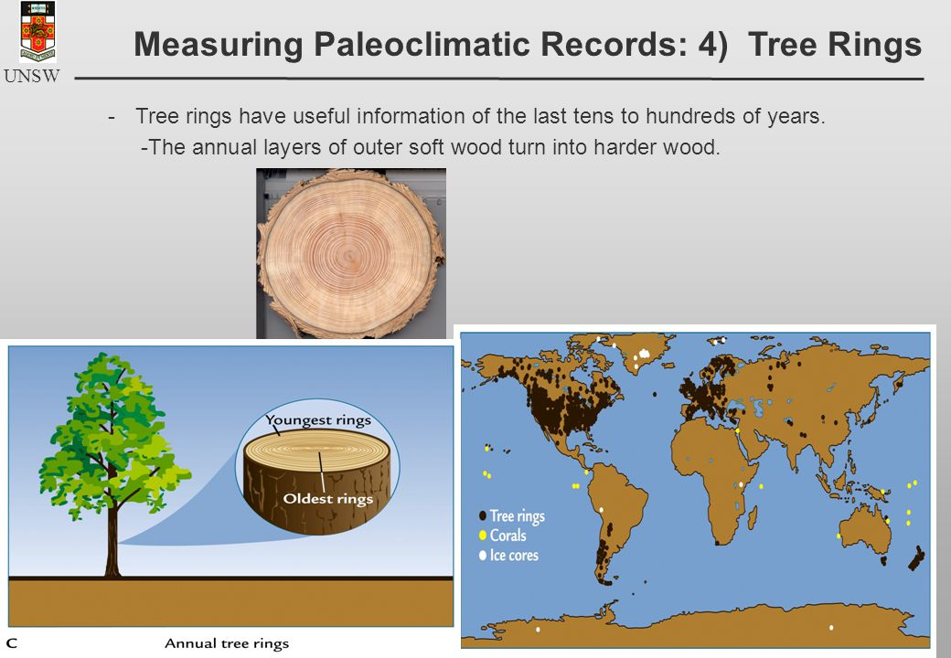 UNSW -Tree rings have useful information of the last tens to hundreds of years.