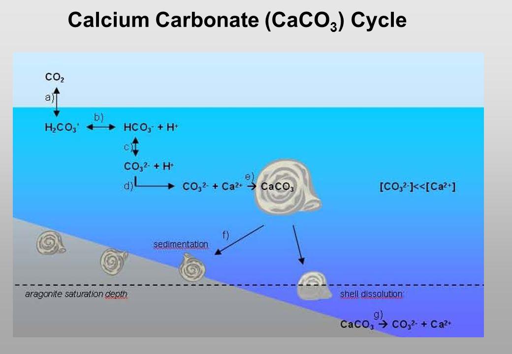 Calcium Carbonate (CaCO 3 ) Cycle