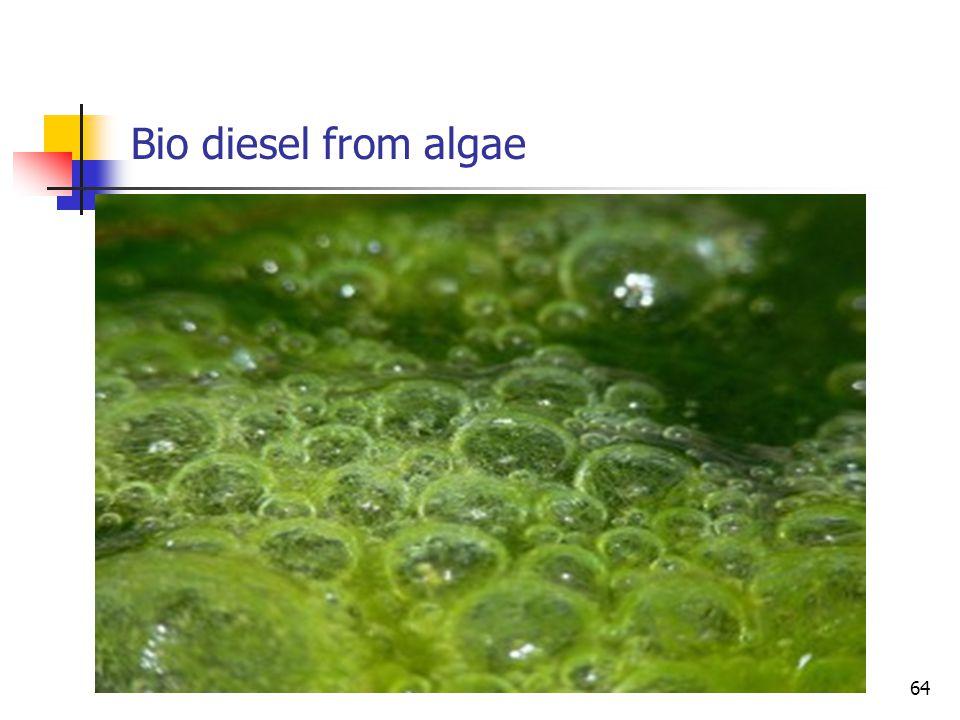 Bio diesel from algae 64