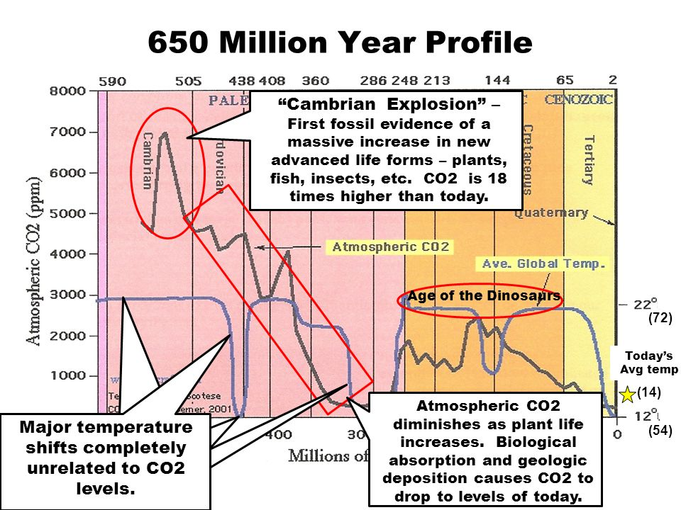 650 Million Year Profile Cambrian Explosion – First fossil evidence of a massive increase in new advanced life forms – plants, fish, insects, etc.