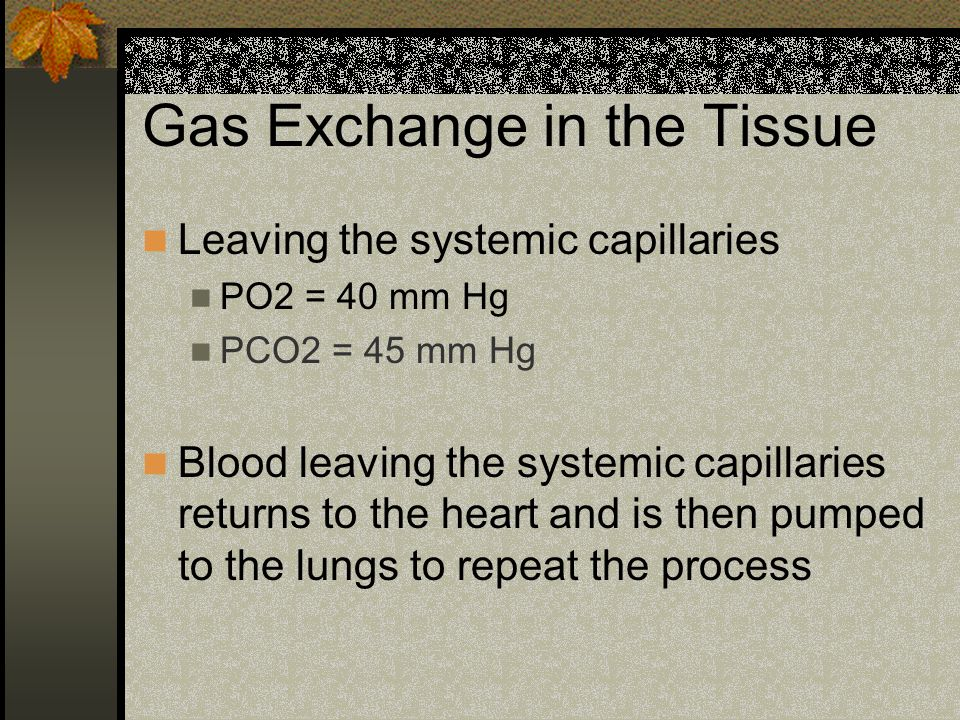 Gas Exchange in the Tissue Leaving the systemic capillaries PO2 = 40 mm Hg PCO2 = 45 mm Hg Blood leaving the systemic capillaries returns to the heart and is then pumped to the lungs to repeat the process