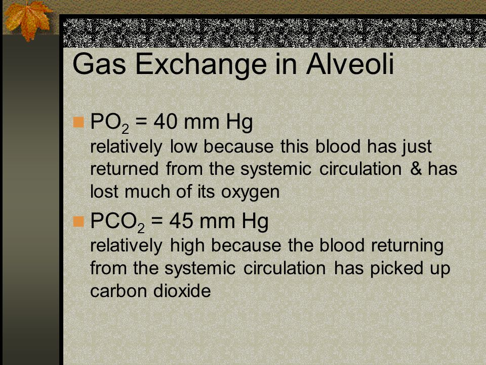 Gas Exchange in Alveoli PO 2 = 40 mm Hg relatively low because this blood has just returned from the systemic circulation & has lost much of its oxygen PCO 2 = 45 mm Hg relatively high because the blood returning from the systemic circulation has picked up carbon dioxide