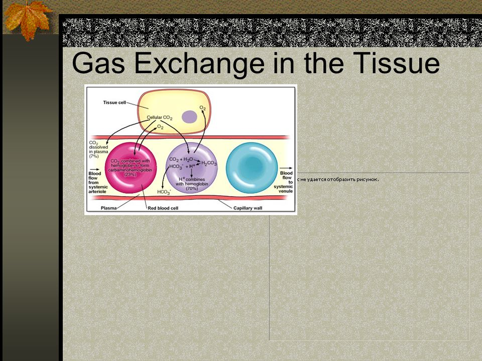 Gas Exchange in the Tissue
