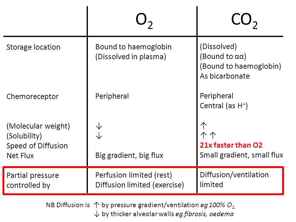 Ventilation: Perfusion Ratio Is there more ventilation at the base or apex of the lung.