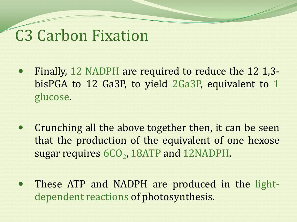 C3 Carbon Fixation Finally, 12 NADPH are required to reduce the 12 1,3- bisPGA to 12 Ga3P, to yield 2Ga3P, equivalent to 1 glucose.