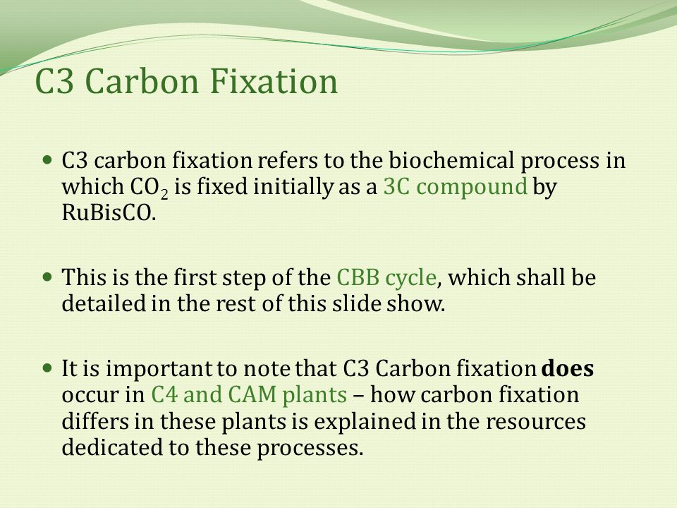 C3 carbon fixation refers to the biochemical process in which CO 2 is fixed initially as a 3C compound by RuBisCO.