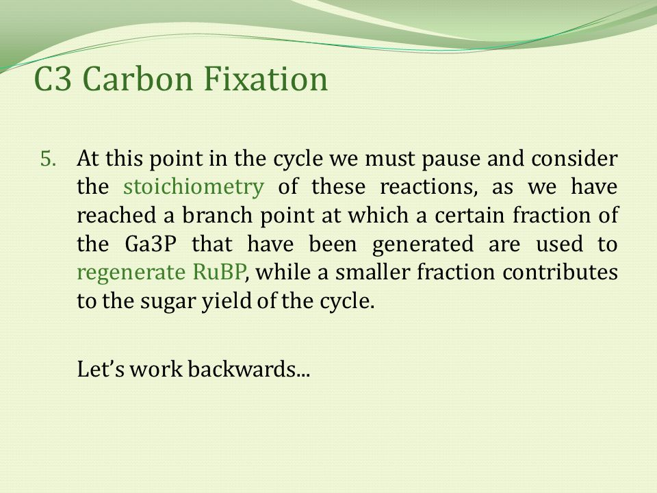 C3 Carbon Fixation 5. At this point in the cycle we must pause and consider the stoichiometry of these reactions, as we have reached a branch point at