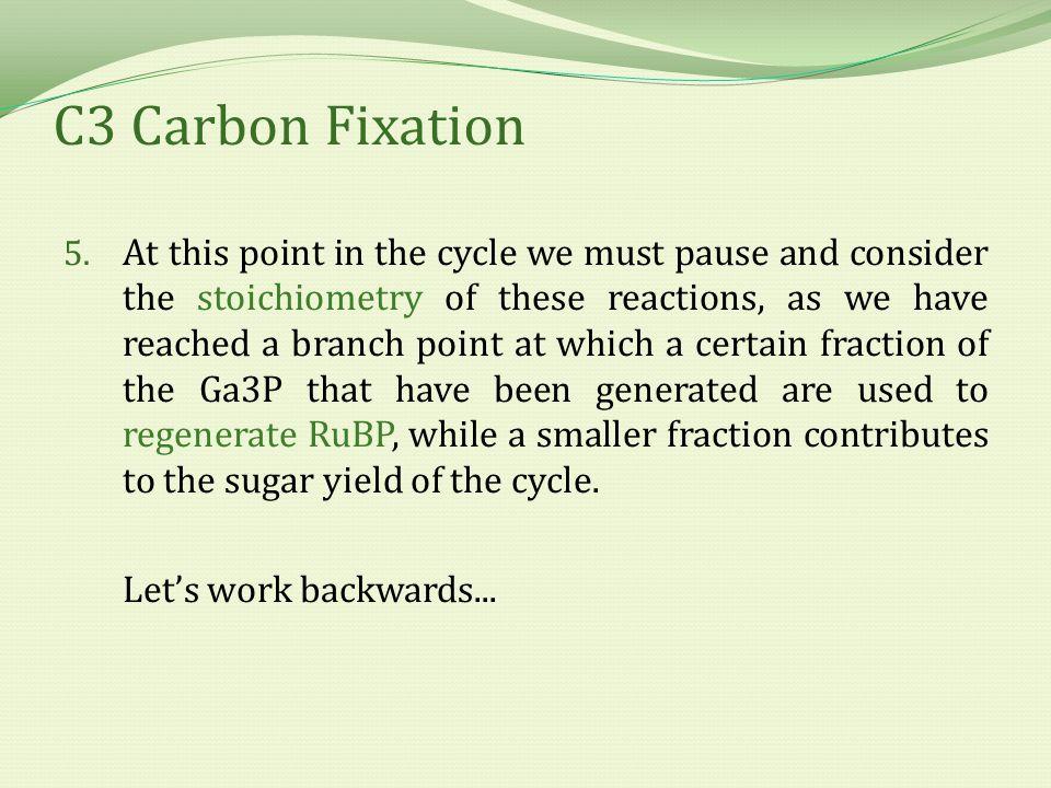 C3 Carbon Fixation 5.