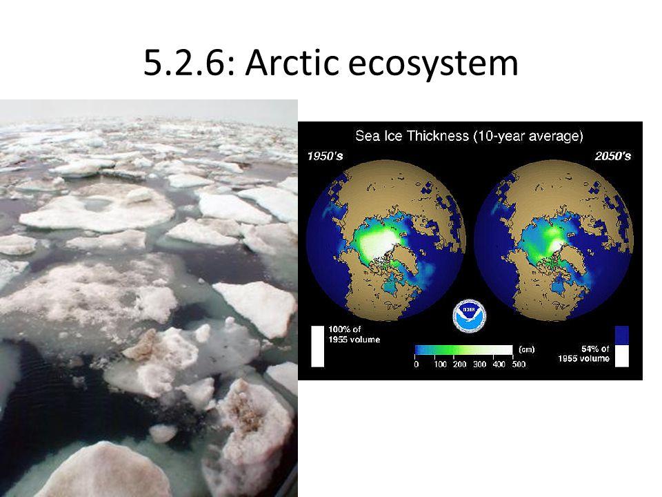 5.2.6: Arctic ecosystem