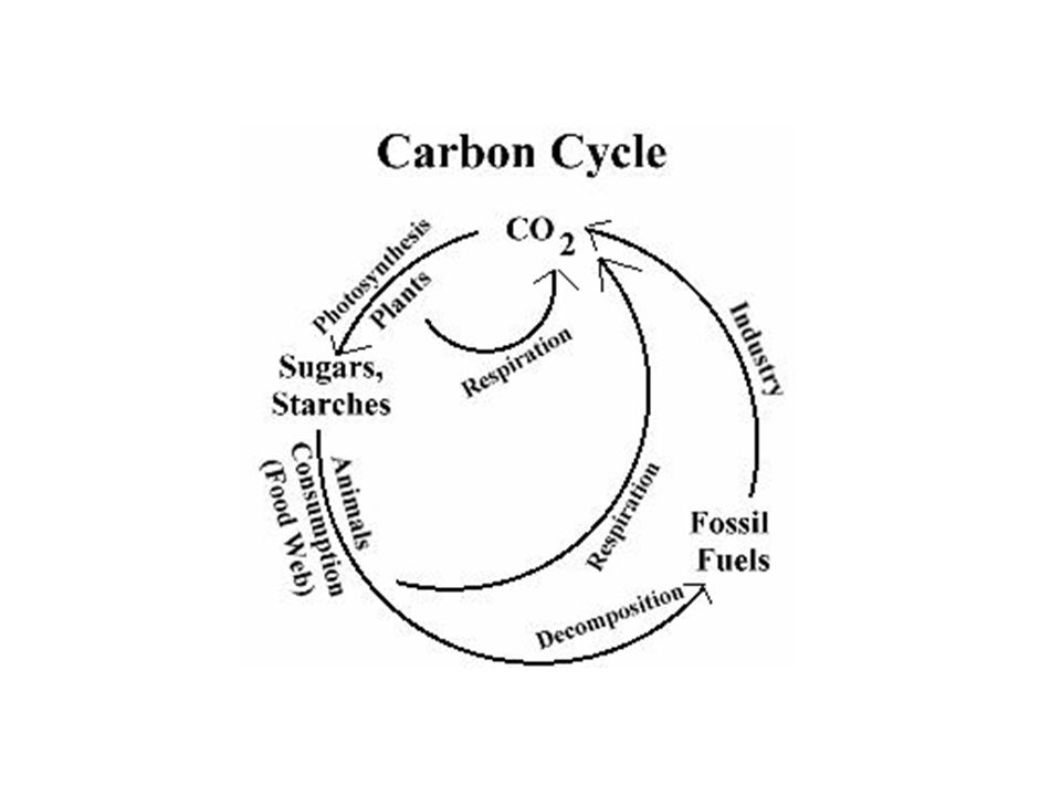 52 the greenhouse effect carbon cycle ppt download 3 521 carbon cycle ccuart Choice Image