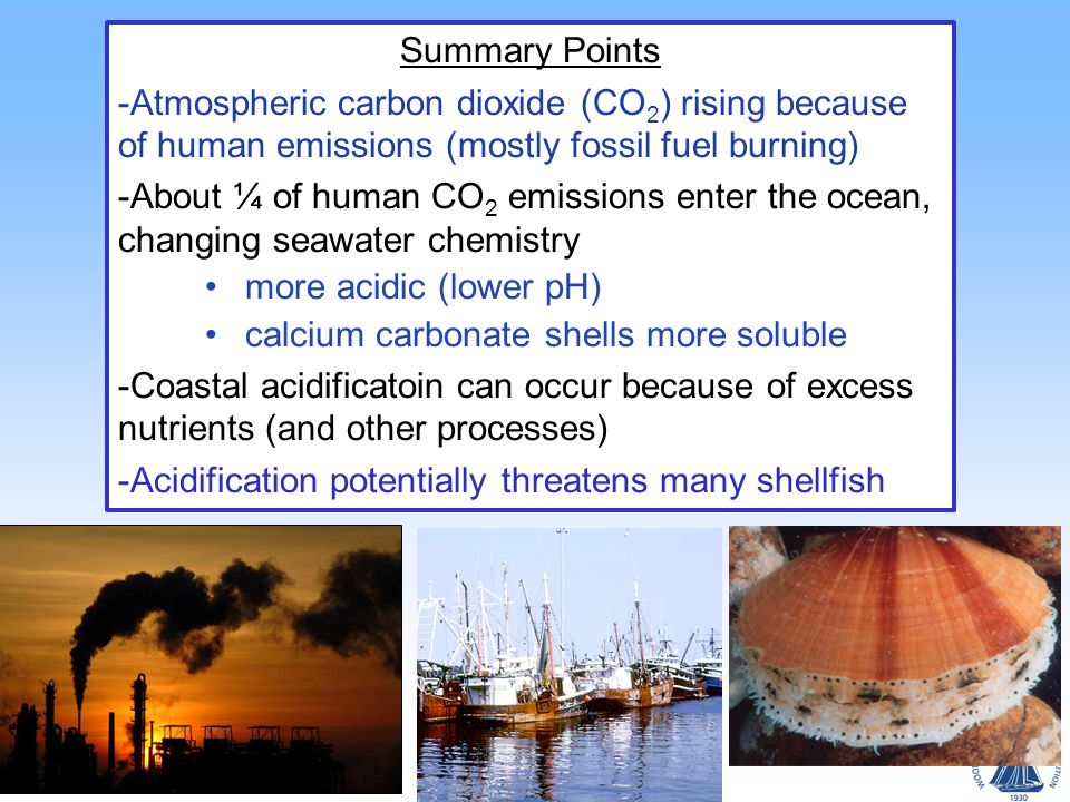 Summary Points -Atmospheric carbon dioxide (CO 2 ) rising because of human emissions (mostly fossil fuel burning) -About ¼ of human CO 2 emissions enter the ocean, changing seawater chemistry more acidic (lower pH) calcium carbonate shells more soluble -Coastal acidificatoin can occur because of excess nutrients (and other processes) -Acidification potentially threatens many shellfish