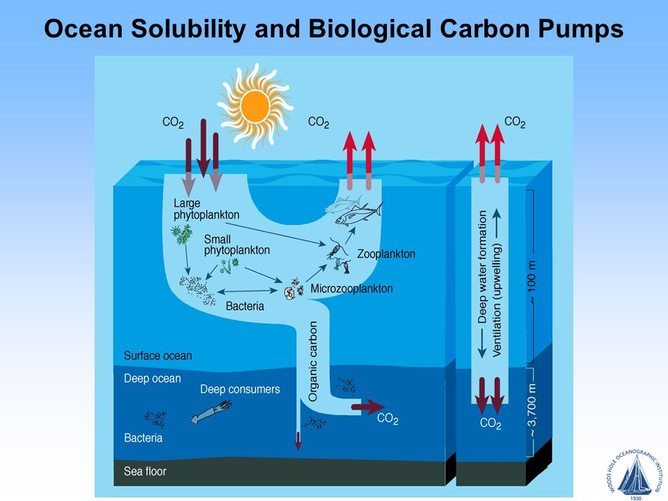 Ocean Solubility and Biological Carbon Pumps