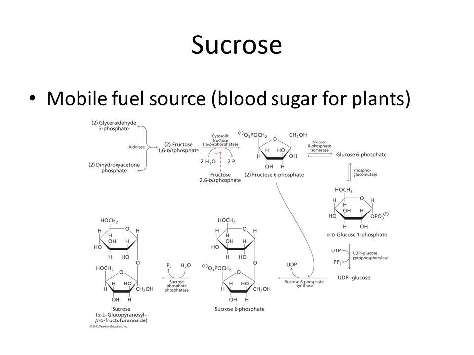 Sucrose Mobile fuel source (blood sugar for plants)