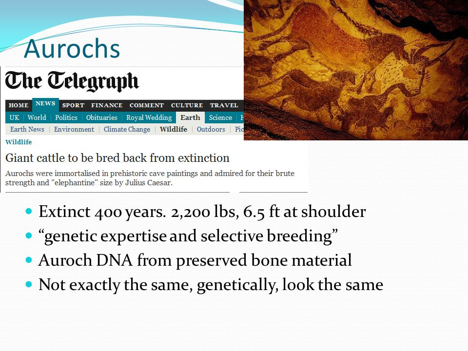 Aurochs Extinct 400 years.