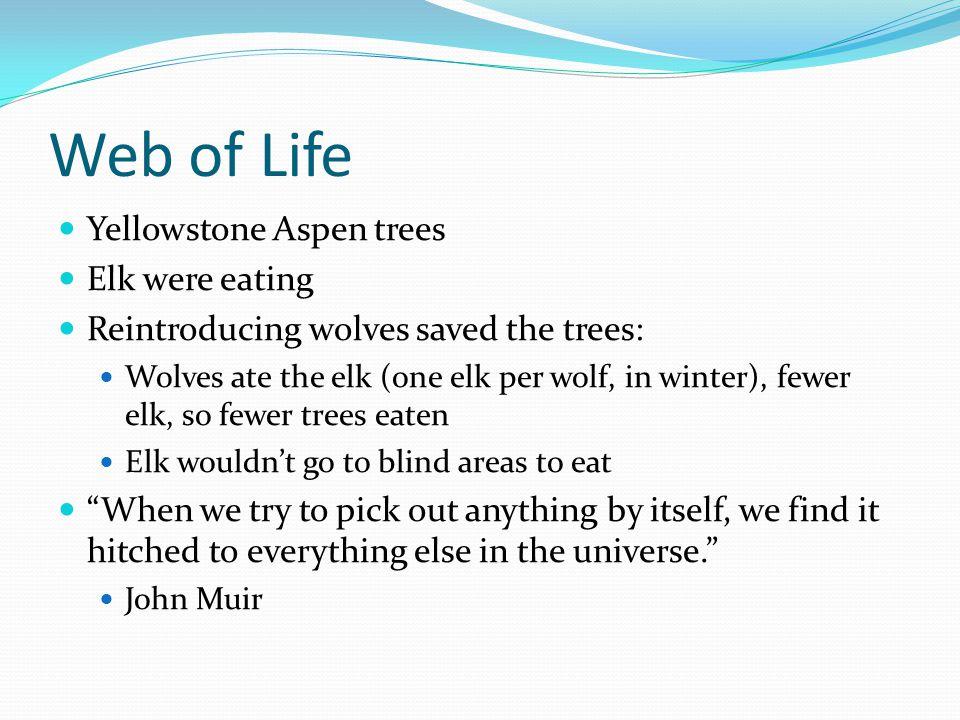 Web of Life Yellowstone Aspen trees Elk were eating Reintroducing wolves saved the trees: Wolves ate the elk (one elk per wolf, in winter), fewer elk,