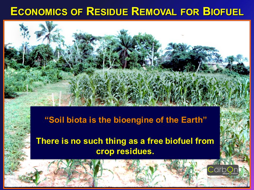 """""""Soil biota is the bioengine of the Earth"""" There is no such thing as a free biofuel from crop residues. E CONOMICS OF R ESIDUE R EMOVAL FOR B IOFUEL"""