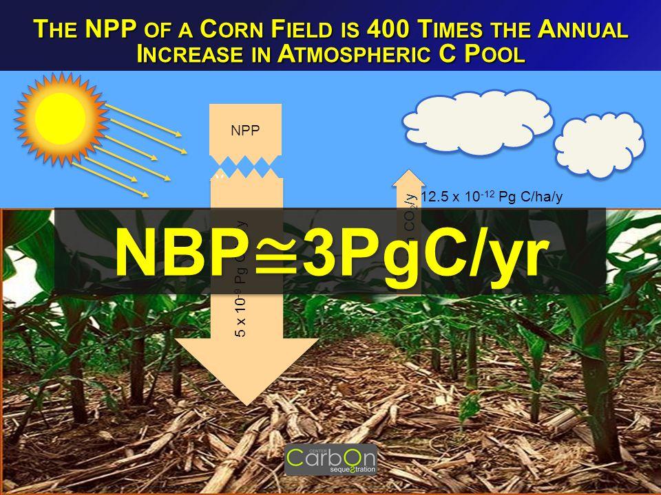 NPP 5 x 10 -9 Pg C/ha 12.5 x 10 -12 Pg C/ha/y v v NPP 5 x 10 -9 Pg C/ha/y + 2 ppm CO 2 /y T HE NPP OF A C ORN F IELD IS 400 T IMES THE A NNUAL I NCREASE IN A TMOSPHERIC C P OOL NBP ≅ 3PgC/yr