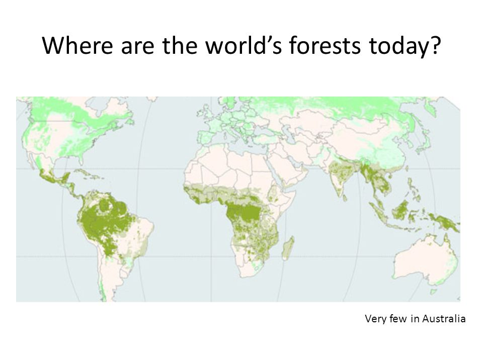 Where are the world's forests today Very few in Australia