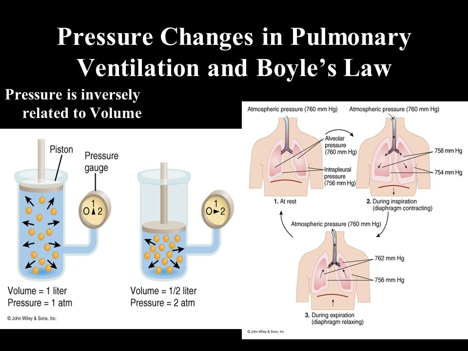 Pressure Changes in Pulmonary Ventilation and Boyle's Law Pressure is inversely related to Volume