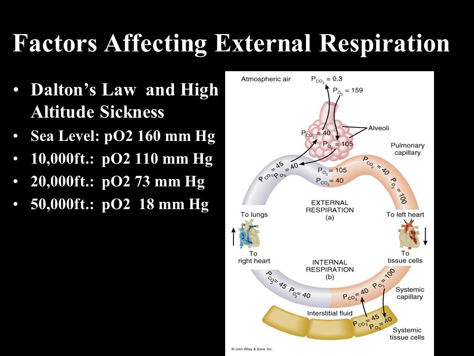 Factors Affecting External Respiration Dalton's Law and High Altitude Sickness Sea Level: pO2 160 mm Hg 10,000ft.: pO2 110 mm Hg 20,000ft.: pO2 73 mm Hg 50,000ft.: pO2 18 mm Hg