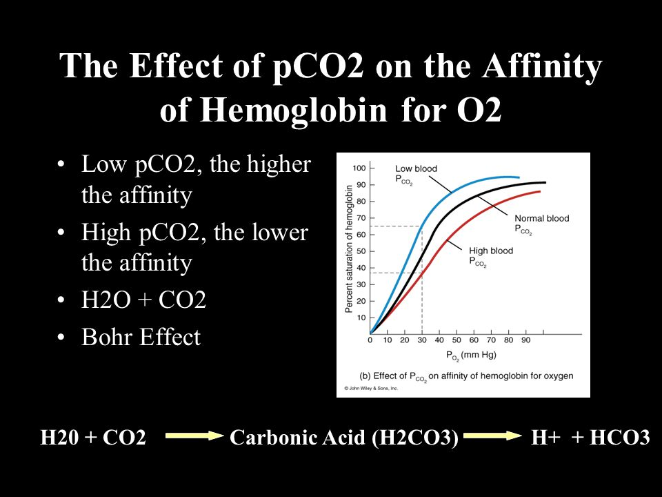 The Effect of pCO2 on the Affinity of Hemoglobin for O2 Low pCO2, the higher the affinity High pCO2, the lower the affinity H2O + CO2 Bohr Effect H20 + CO2 Carbonic Acid (H2CO3) H+ + HCO3