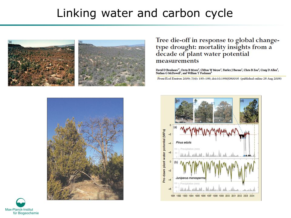 Linking water and carbon cycle