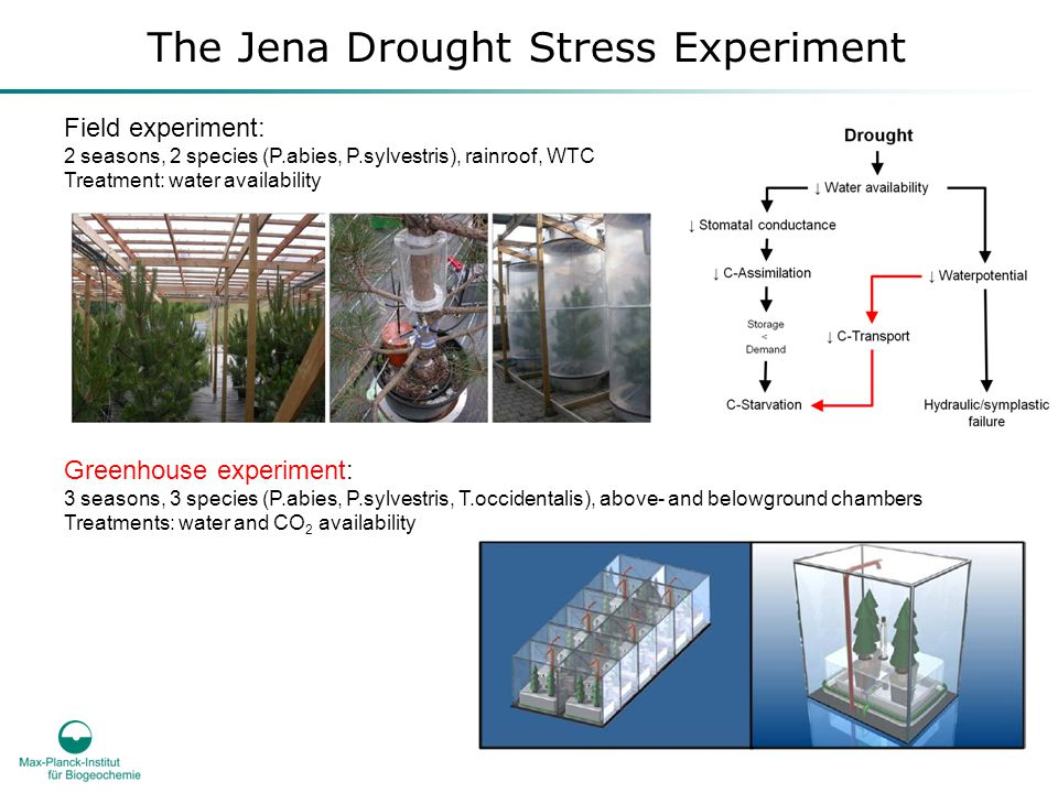 The Jena Drought Stress Experiment Field experiment: 2 seasons, 2 species (P.abies, P.sylvestris), rainroof, WTC Treatment: water availability Greenhouse experiment: 3 seasons, 3 species (P.abies, P.sylvestris, T.occidentalis), above- and belowground chambers Treatments: water and CO 2 availability