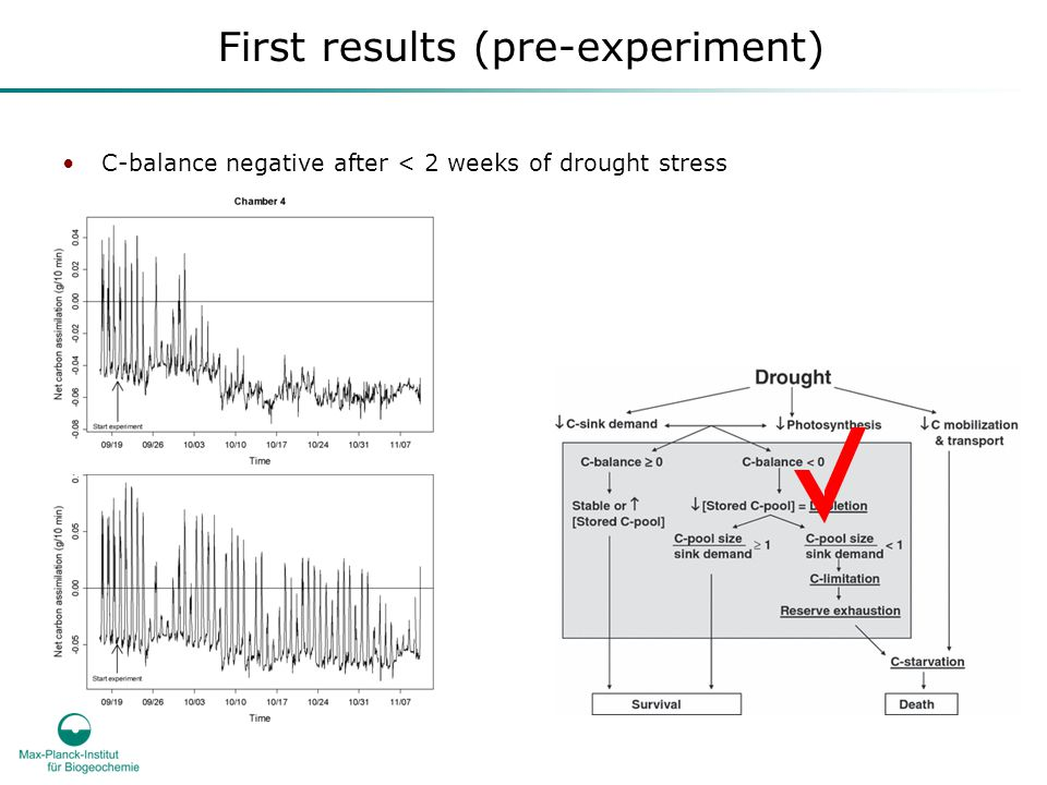 First results (pre-experiment) C-balance negative after < 2 weeks of drought stress