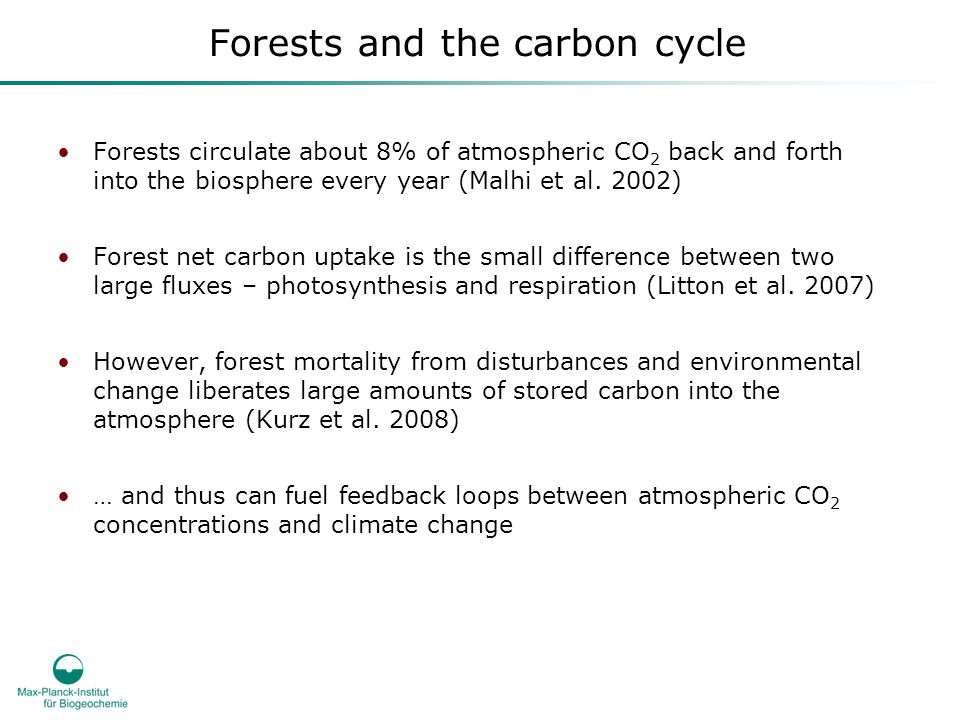 Forests and the carbon cycle Forests circulate about 8% of atmospheric CO 2 back and forth into the biosphere every year (Malhi et al.