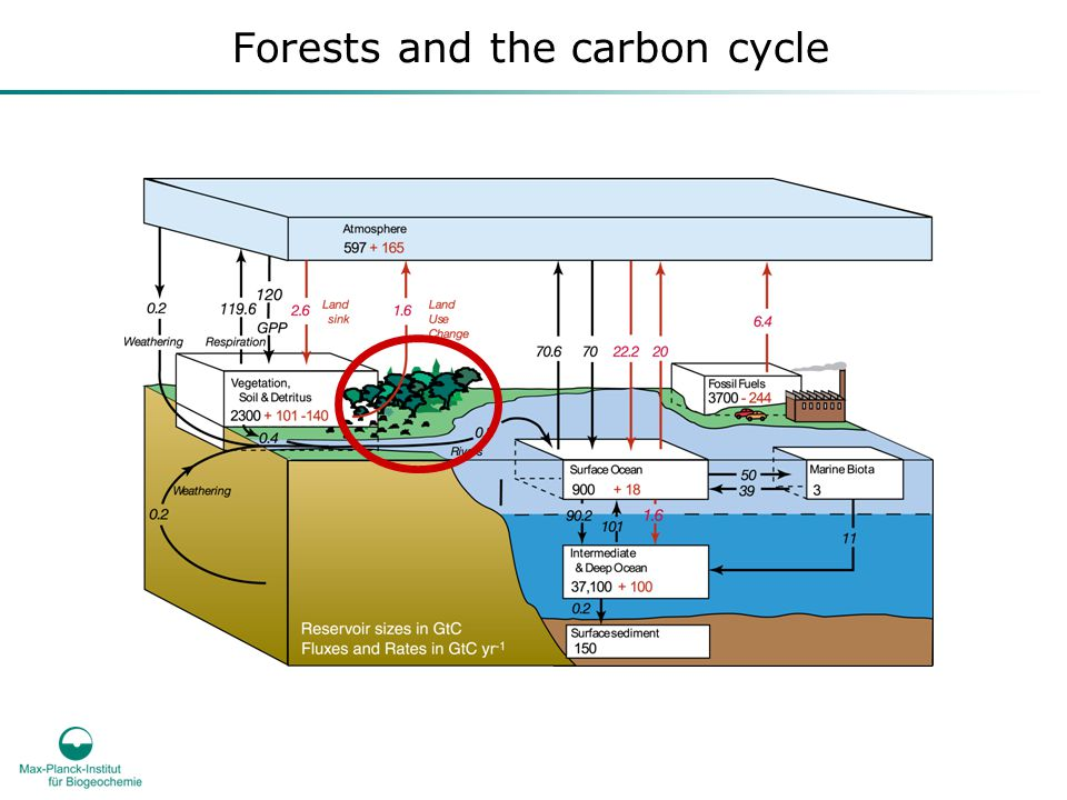 Forest and drought Anthropogenic GHGs, mainly CO 2, have been linked to climate change …...