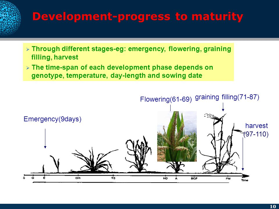 10 Development-progress to maturity  Through different stages-eg: emergency, flowering, graining filling, harvest  The time-span of each development