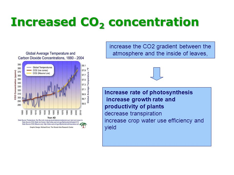 Increased CO 2 concentration increase the CO2 gradient between the atmosphere and the inside of leaves, Increase rate of photosynthesis increase growt