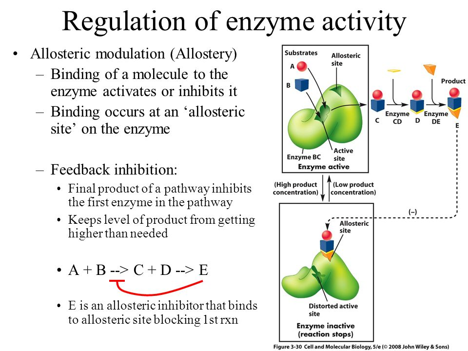 Regulation of enzyme activity Allosteric modulation (Allostery) –Binding of a molecule to the enzyme activates or inhibits it –Binding occurs at an 'allosteric site' on the enzyme –Feedback inhibition: Final product of a pathway inhibits the first enzyme in the pathway Keeps level of product from getting higher than needed A + B --> C + D --> E E is an allosteric inhibitor that binds to allosteric site blocking 1st rxn