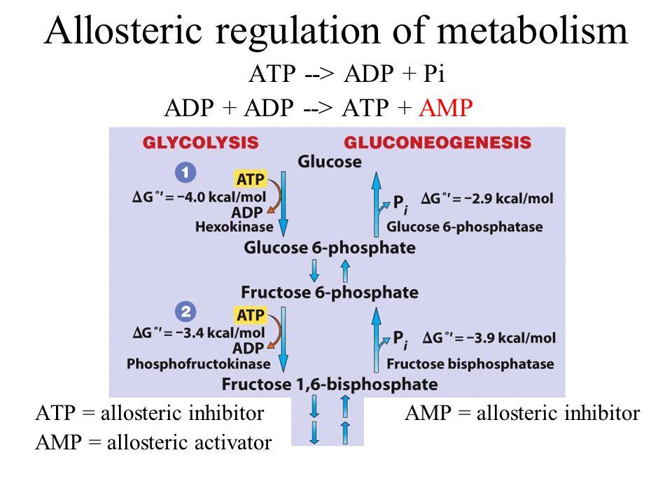 Allosteric regulation of metabolism AMP = allosteric inhibitorATP = allosteric inhibitor AMP = allosteric activator ATP --> ADP + Pi ADP + ADP --> ATP + AMP