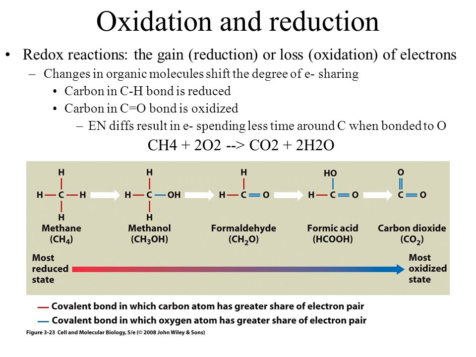 Oxidation and reduction Redox reactions: the gain (reduction) or loss (oxidation) of electrons –Changes in organic molecules shift the degree of e- sharing Carbon in C-H bond is reduced Carbon in C=O bond is oxidized –EN diffs result in e- spending less time around C when bonded to O CH4 + 2O2 --> CO2 + 2H2O