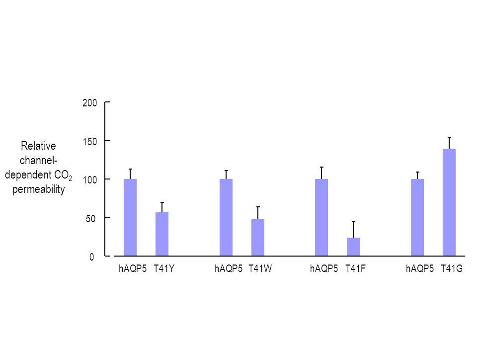 0 50 100 150 200 hAQP5T41YhAQP5T41WhAQP5T41FhAQP5T41G Relative channel- dependent CO 2 permeability