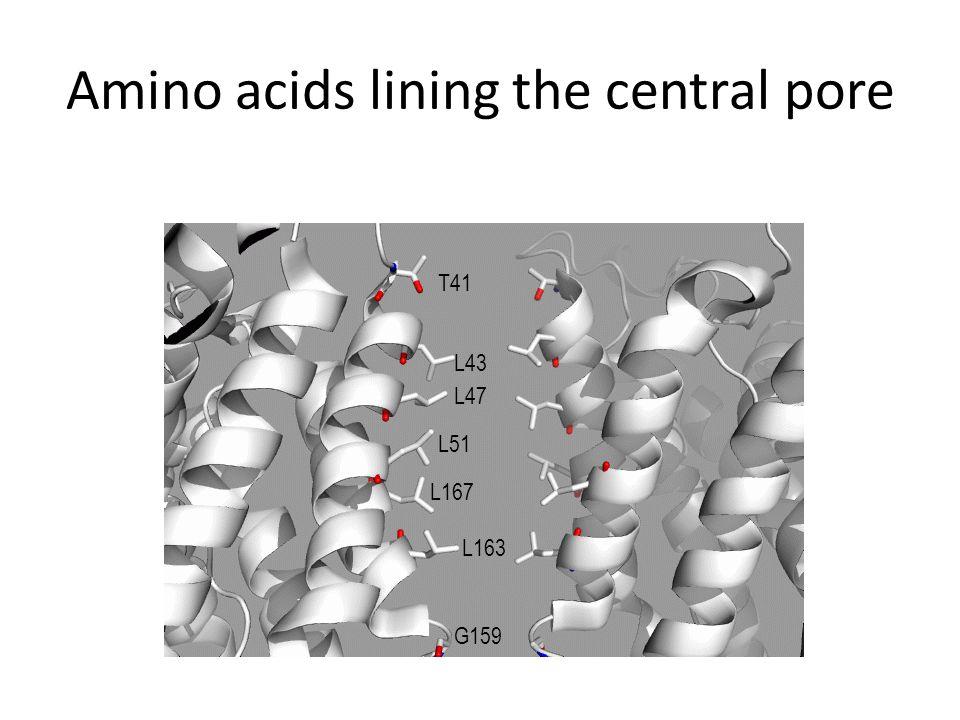 Amino acids lining the central pore T41 L43 L47 L51 L167 L163 G159