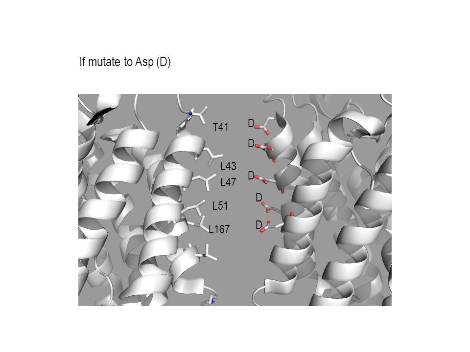 If mutate to Asp (D) T41 L43 L47 L51 L167 D D D D D