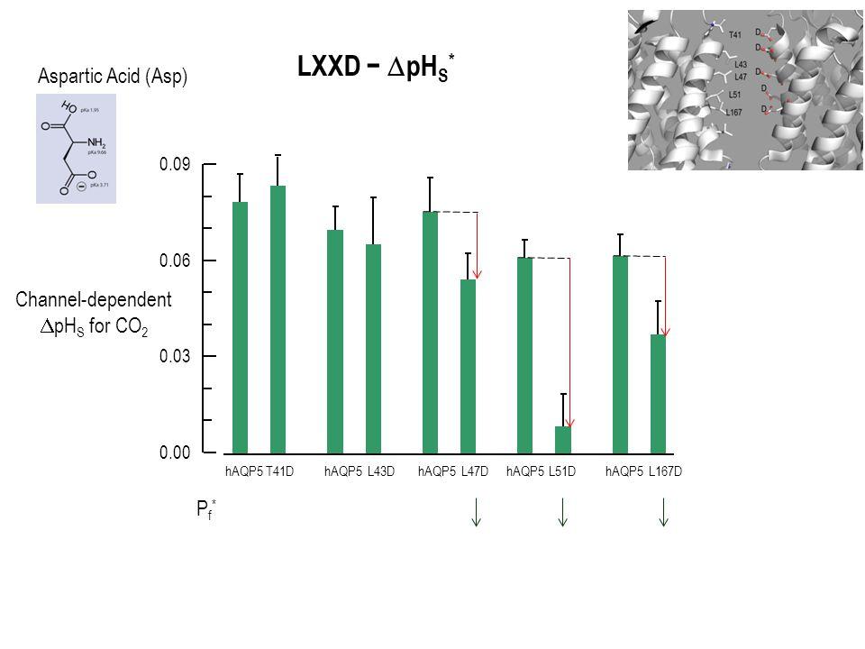 Channel-dependent  pH S for CO 2 0.00 0.03 0.06 0.09 hAQP5T41DhAQP5L43DhAQP5L47DhAQP5L51DhAQP5L167D LXXD −  pH S * Pf*Pf* Aspartic Acid (Asp)
