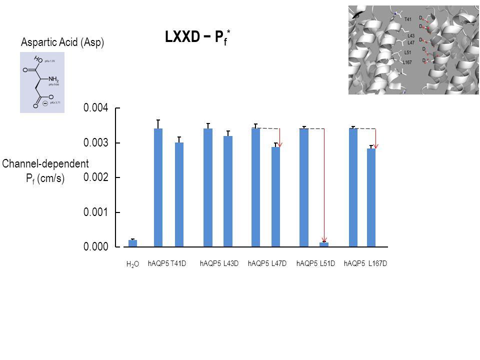 Channel-dependent P f (cm/s) 0.000 0.001 0.002 0.003 0.004 H2OH2O hAQP5T41DhAQP5L43DhAQP5L47DhAQP5L51DhAQP5L167D LXXD − P f * Aspartic Acid (Asp)