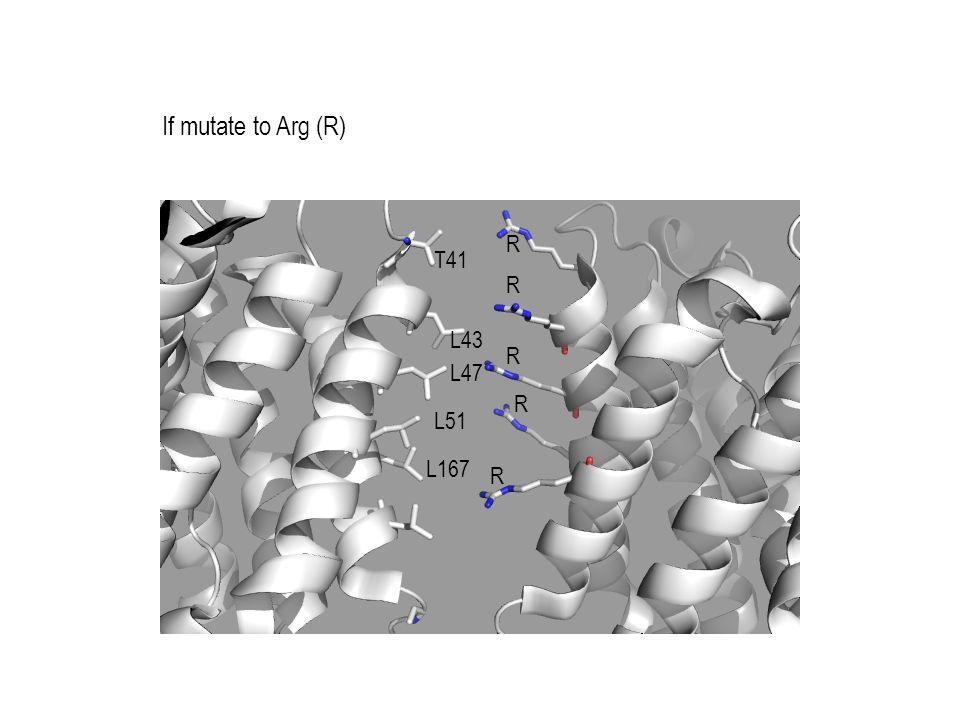 If mutate to Arg (R) T41 L43 L47 L51 L167 R R R R R
