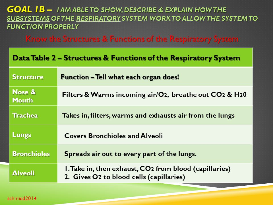 GOAL 1B – I AM ABLE TO SHOW, DESCRIBE & EXPLAIN HOW THE SUBSYSTEMS OF THE RESPIRATORY SYSTEM WORK TO ALLOW THE SYSTEM TO FUNCTION PROPERLY schmied2014