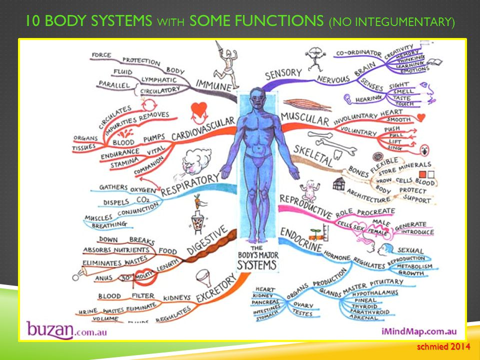 10 BODY SYSTEMS WITH SOME FUNCTIONS (NO INTEGUMENTARY) schmied 2014