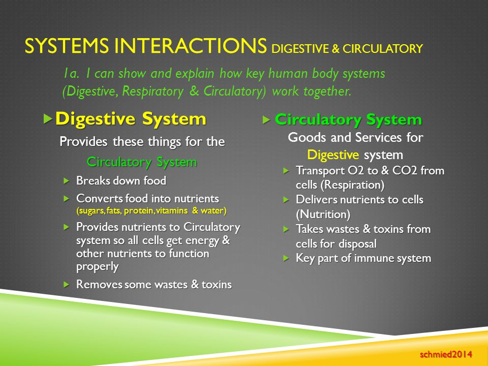 SYSTEMS INTERACTIONS DIGESTIVE & CIRCULATORY  Digestive System Provides these things for the Circulatory System  Breaks down food  Converts food in