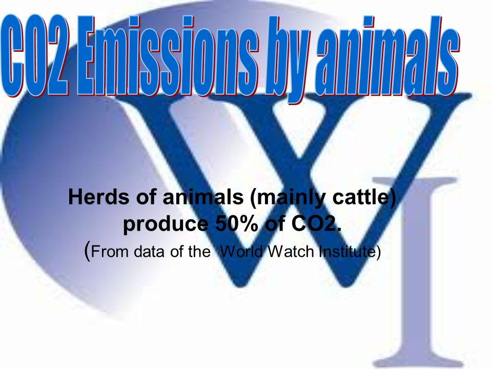 Herds of animals (mainly cattle) produce 50% of CO2. ( From data of the World Watch Institute)