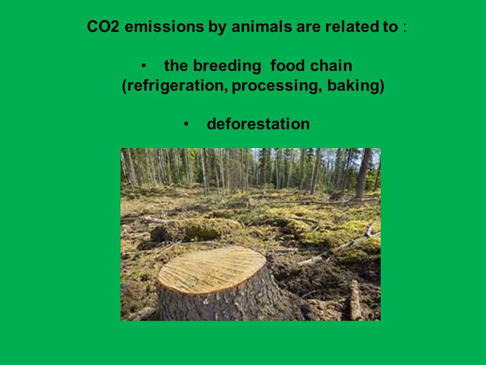 CO2 emissions by animals are related to : the breeding food chain (refrigeration, processing, baking) deforestation